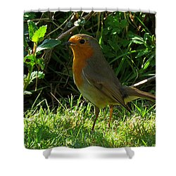 Robin2 Shower Curtain