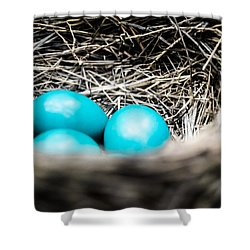 Robin's Eggs Shower Curtain by Shelby  Young