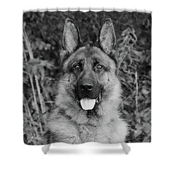 Shower Curtain featuring the photograph Rocco - Bw by Sandy Keeton