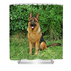 Shower Curtain featuring the photograph Rocco Sitting by Sandy Keeton
