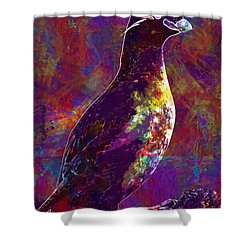 Rock Bird Auklet Crested Birds  Shower Curtain