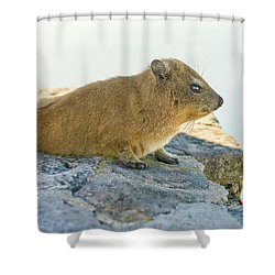 Rock Hyrax On Table Mountain Cape Town South Africa Shower Curtain by Marek Poplawski