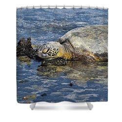 Shower Curtain featuring the photograph Rock Pillow by Pamela Walton