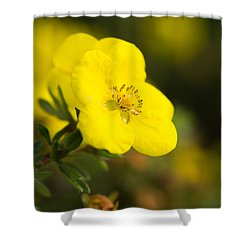 Shower Curtain featuring the photograph Rock Rose by Erin Kohlenberg