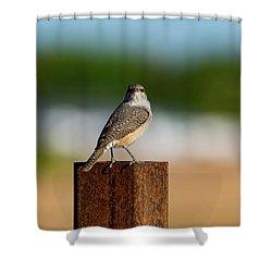 Rock Wren 1 Shower Curtain