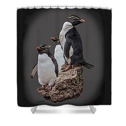 Rockhopper Penguins Shower Curtain
