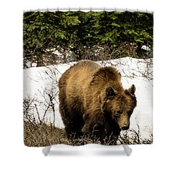 Rockies Grizzly Shower Curtain