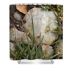 Rocks And Grass Shower Curtain