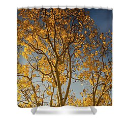 Rocky Mountain Fall Colors Shower Curtain