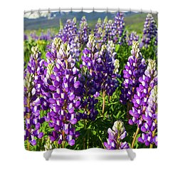 Rocky Mountain Lupines  Shower Curtain by Aaron Spong