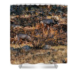 Rocky Mountain National Park Deer Colorado Shower Curtain