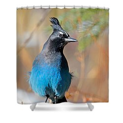 Rocky Mountain Steller's Jay Shower Curtain
