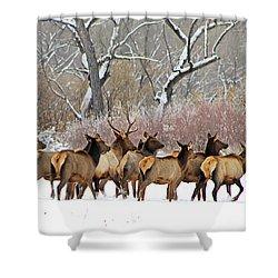 Rocky Mountain Winter Elk Shower Curtain