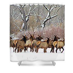 Rocky Mountain Winter Elk Shower Curtain