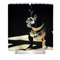 Shower Curtain featuring the photograph Rocky by Sharon Jones