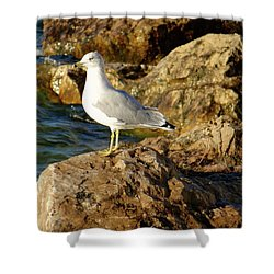 Rocky Waters Shower Curtain