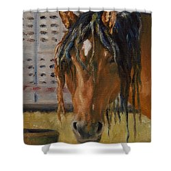 Rodeo Horse Shower Curtain