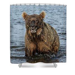Rogue Bear  Shower Curtain