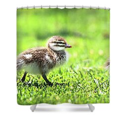 Rogue Duckling, Yanchep National Park Shower Curtain