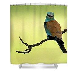 Roller  Shower Curtain