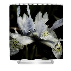 Romantic Dwarf Iris Shower Curtain by Richard Cummings