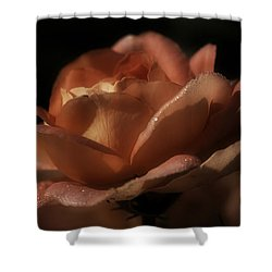 Romantic September Rose Shower Curtain