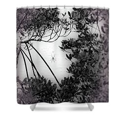 Shower Curtain featuring the photograph Romantic Spider by Megan Dirsa-DuBois