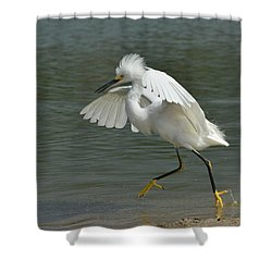 Romp In The Lagoon Shower Curtain