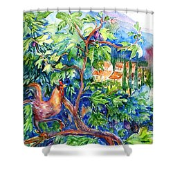 Rooster In A Fig Tree, Tuscany   Shower Curtain