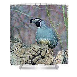 Rooster Quail  Shower Curtain by Jeff Swan
