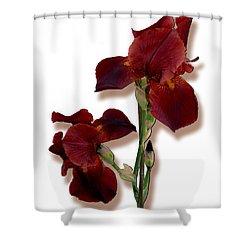 Root Beer Irises Shower Curtain by Tara Hutton