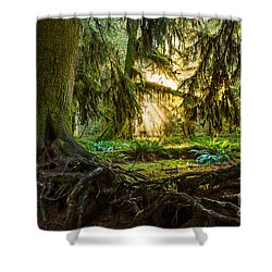 Roots And Light Shower Curtain