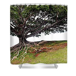 Roots Of Honolulu Shower Curtain by Gina Savage