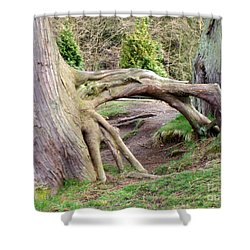 Roots Of Strength Shower Curtain by Mary Mikawoz