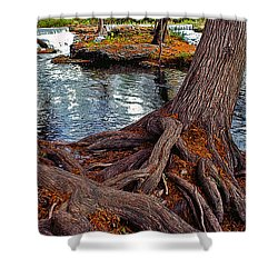 Roots On The River Shower Curtain by Stephen Anderson