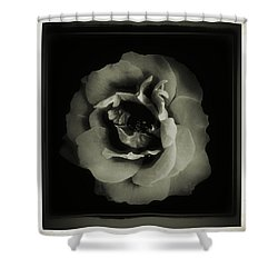 Rose 12 Shower Curtain
