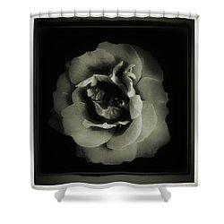 Rose 12 Shower Curtain