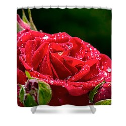 Shower Curtain featuring the photograph Rose After Rain by Leif Sohlman