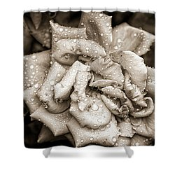 Rose After The Rain Shower Curtain