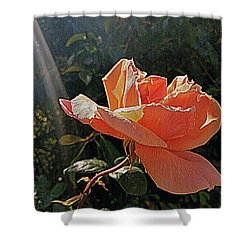 Rose And Rays Shower Curtain