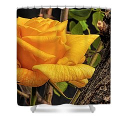 Rose And Thorns Shower Curtain by Charles Ables
