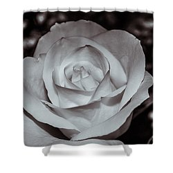 Rose B/w - 9166 Shower Curtain by G L Sarti