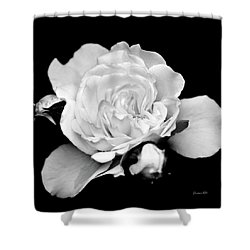 Shower Curtain featuring the photograph Rose Black And White by Christina Rollo