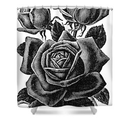 Shower Curtain featuring the digital art Rose Black by ReInVintaged