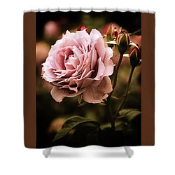 Rose Blooms At Dusk Shower Curtain by Jessica Jenney