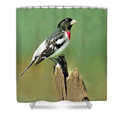 Rose Breasted Grosbeak Shower Curtain by Marion Johnson