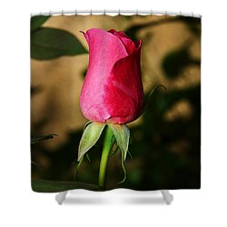 Rose Bud Shower Curtain by Anthony Jones