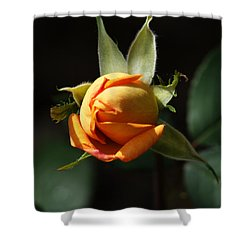Shower Curtain featuring the painting Rose Bud by Debra Crank