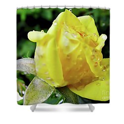Rose Bud Dew Drops Shower Curtain