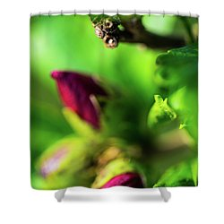 Rose Buds Body Guard Shower Curtain